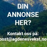 300×250-Din-Annonse-Her-4